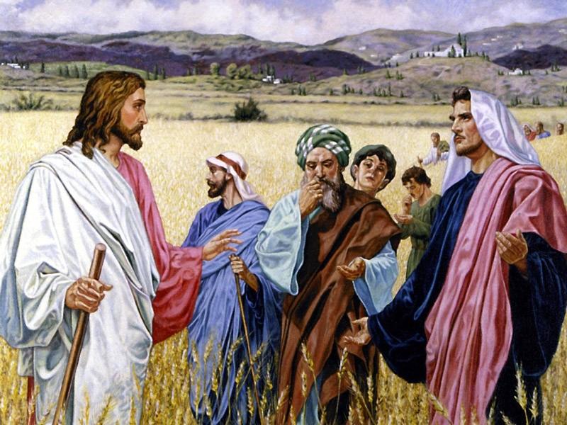 Les épis volés (Mt 12,1-8 ; Mc 2,23-28 ; Lc 6,1-5)